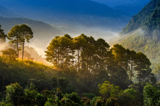 Poranek lasu ma morze mgły ang khang chiang mai tajlandii