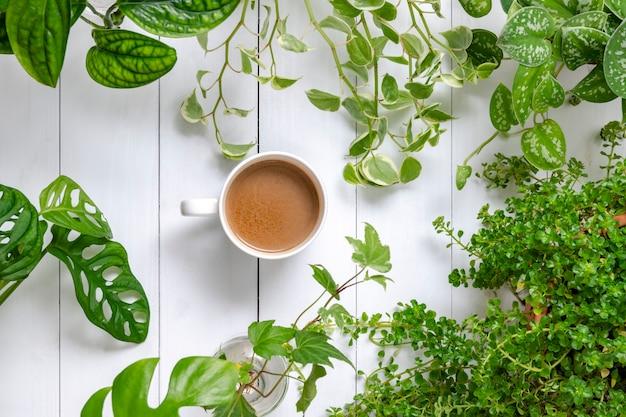 Poranna kawa z roślinami doniczkowymi w tle