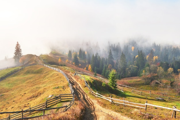 Poranna mgła skrada się ze skrawków nad jesiennym górskim lasem pokrytym złotymi liśćmi.
