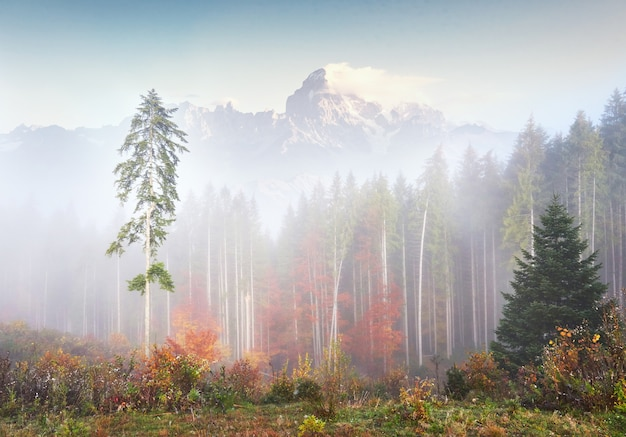 Poranna mgła skrada się ze strzępów nad górskim lasem jesienią pokrytym złotymi liśćmi. snowy szczyty majestatycznych gór w tle