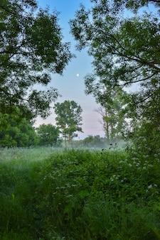 Poranna mgła w lesie, zielony poranek z mgłą