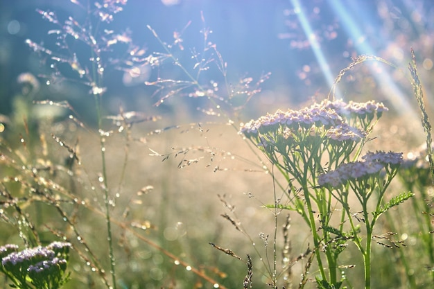 Poranna rosa na zielonej trawie i kolorowych kwiatach.