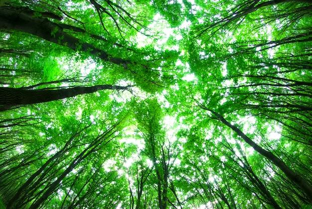 Poranne słońce w zielonym lesie