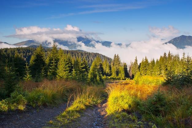 Poranny krajobraz z chmurami. ukraina, karpaty