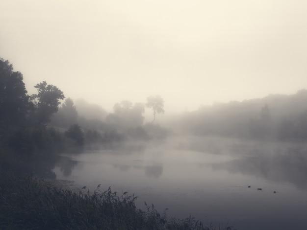 Poranny krajobraz z mgłą nad jeziorem nieostrość