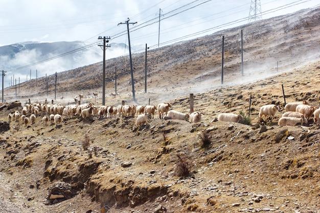 Porcelanowa południowo-zachodnia krajobrazowa śnieżna góra z pastwiskowymi caklami i kózkami na mgle w chodniczku