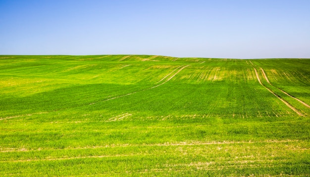 Porośnięta zielona młoda trawa latem lub wiosną