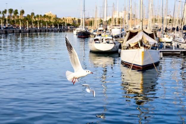 Portowy vell i seagulls lata przy zmierzchem, barcelona, hiszpania