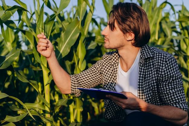 Portret agronoma na polu, który kontroluje plon i odnosi się do rośliny