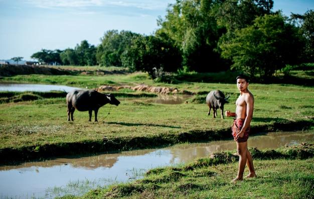 Portret azjatycki młody rolnik topless i ubrany w przepaskę biodrową, dwa bawole pasące się na polach ryżowych.