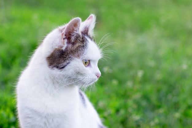 Portret białego kota na tle zielonej trawy, kot patrzy na bok