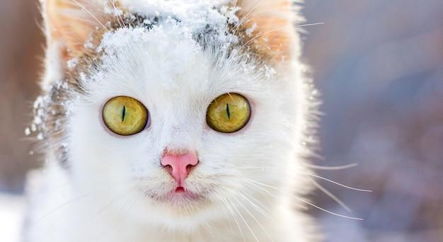 Portret białego kota z dużymi wyrazistymi oczami w zimie
