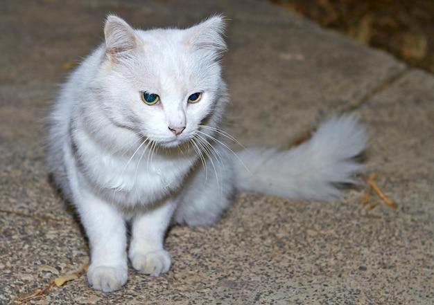 Portret białego kota z zielonymi oczami w naturze