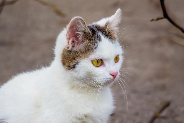 Portret białego młodego kota w przyrodzie