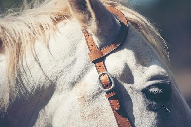 Portret biały koń w gospodarstwie rolnym
