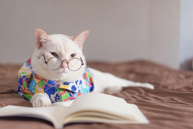 Portret biały kot jest ubranym szkła i czytelniczą książkę