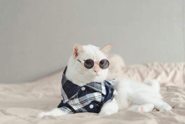 Portret biały kot jest ubranym szkła