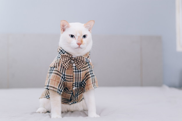 Portret biały kot w okularach
