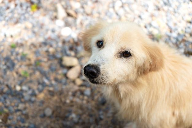 Portret biały ulica pies w thailand. pies tropikalny