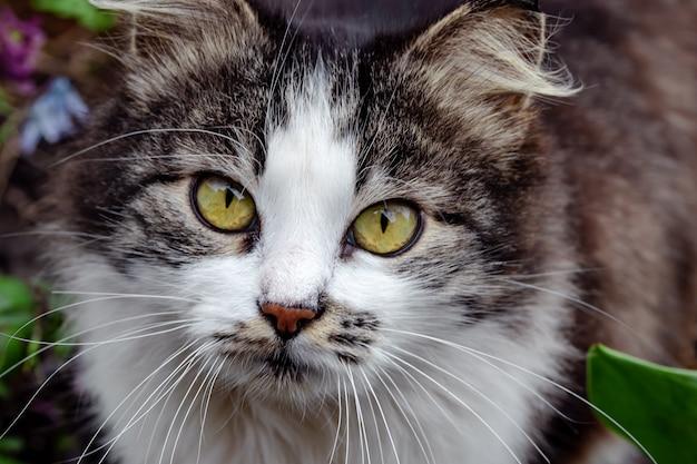 Portret cętkowanego kota z długimi wąsami na zewnątrz.