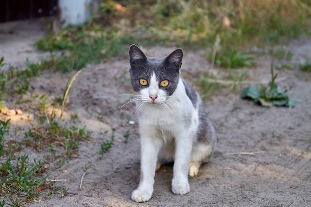 Portret czarno-białego kota o żółtych oczach