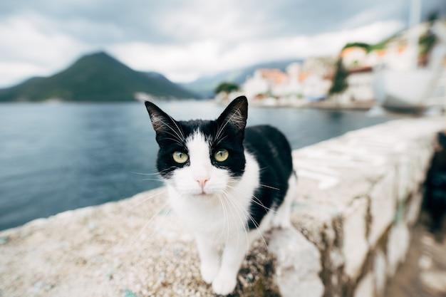 Portret czarno-białego kota w pobliżu wody