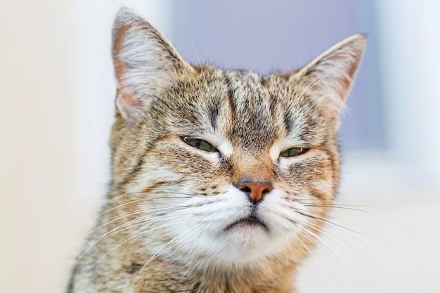 Portret czarno-biały dorosły kot domowy
