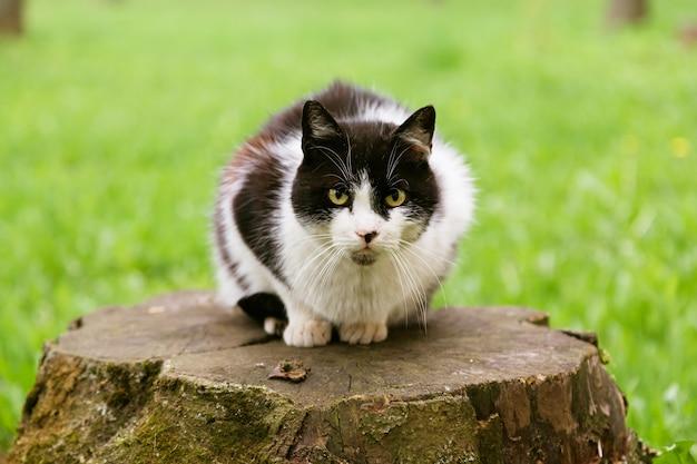 Portret czarno-biały kot patrząc