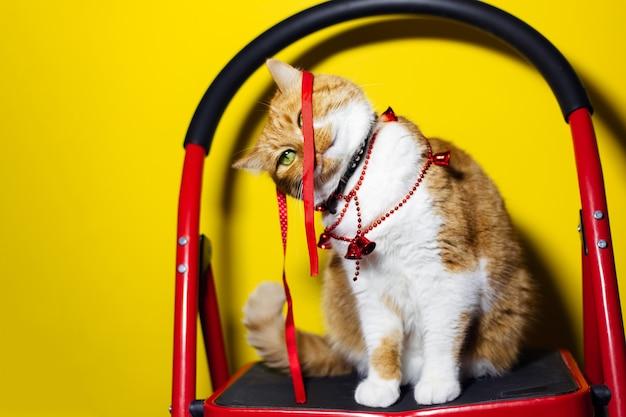 Portret czerwonego białego kota, bawiącego się świąteczną kokardą, stojącego na metalowych schodach