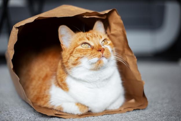 Portret czerwono-biały kot, patrząc w górę, leżący na podłodze w ekologicznej papierowej torbie.