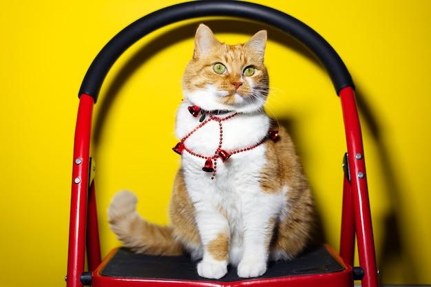 Portret czerwony biały kot z zielonymi oczami