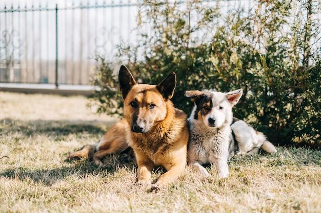 Portret dwóch ulicznych psów siedzących obok siebie na trawie na świeżym powietrzu.