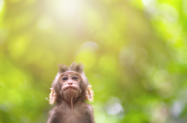 Portret dziecka makaka z bliska