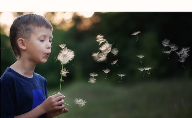 Portret dziecka na zewnątrz w przyrodzie dmuchanie mniszka lekarskiego w słoneczny letni wieczór.