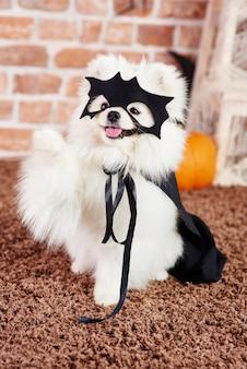Portret figlarnego psa w kostiumie na halloween