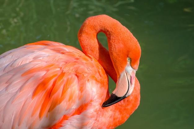 Portret flamingo w kolorze różowym i zielonym
