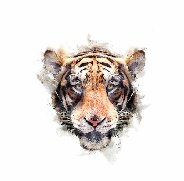 Portret głowy tygrysa w stylu przypominającym akwarele.
