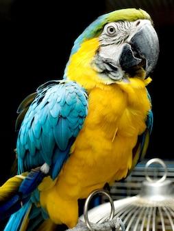 Portret kolorowej papugi siedzącej na klatce