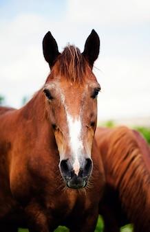 Portret konia. świat zwierząt