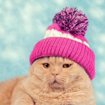 Portret kota w czapce z dzianiny z pomponem