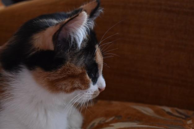 Portret kota w domu