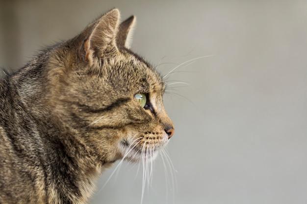 Portret kota z bliska