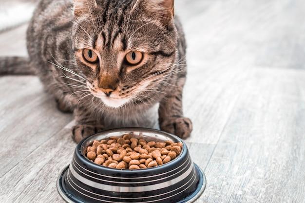 Portret kota z miską suchej karmy. zjada z bliska. skopiuj miejsce