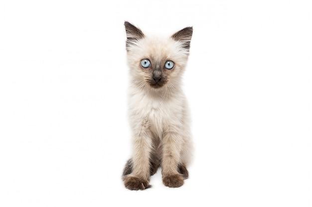 Portret kotka na białym tle