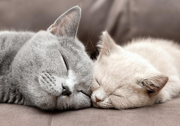 Portret kotów śpiących na kanapie