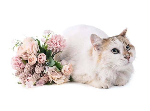 Portret ładnego kota na białej ścianie