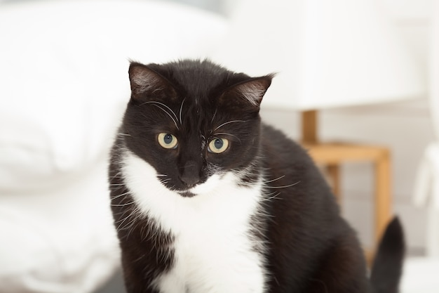 Portret ładny czarno-biały kot