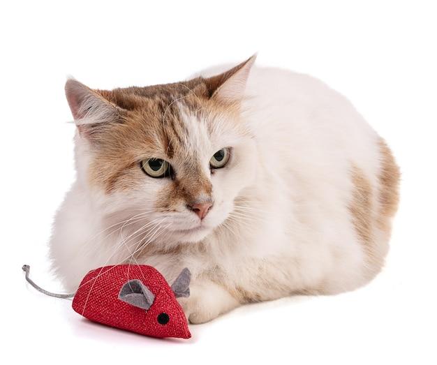 Portret ładny kot z czerwoną myszką na białym tle