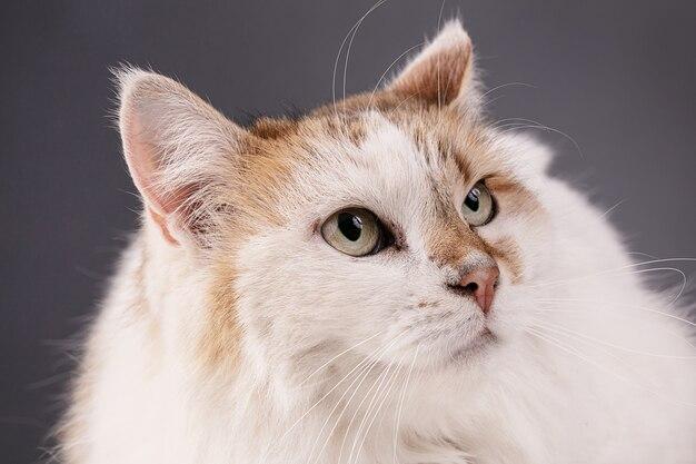 Portret ładny kot, zbliżenie