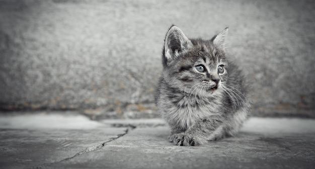 Portret małego kotka w plenerze.